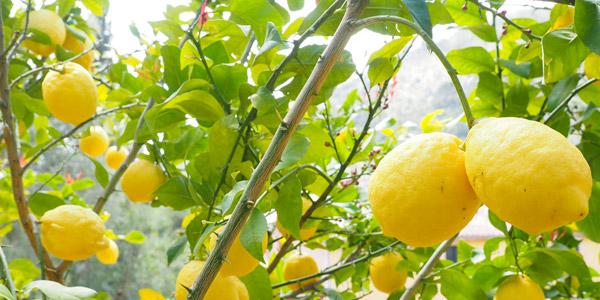 Die Zitronengärten, architektonischen Bauten